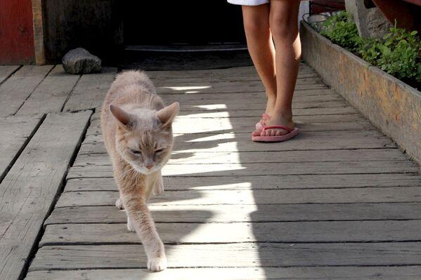 Кот по кличке Стаббс, почетный мэр города Талкитна