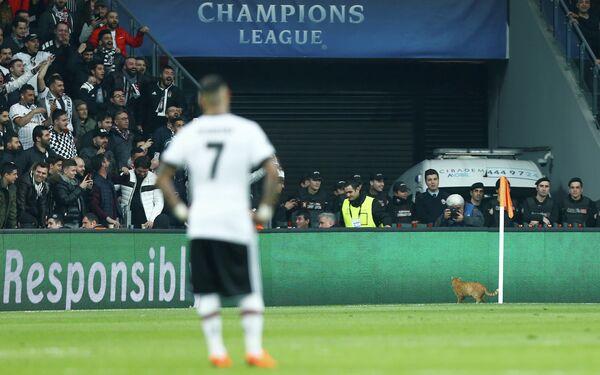 Кот выбежал на поле во время матча ЛЧ Бешикташ - Бавария