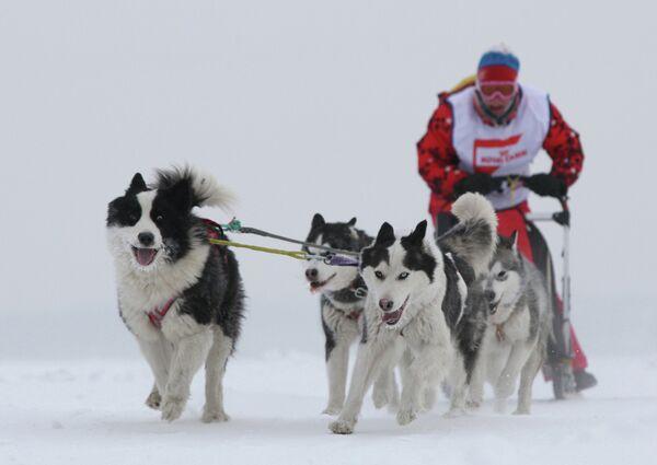 Гонки на собачьих упряжках Рождественский заезд - 2013