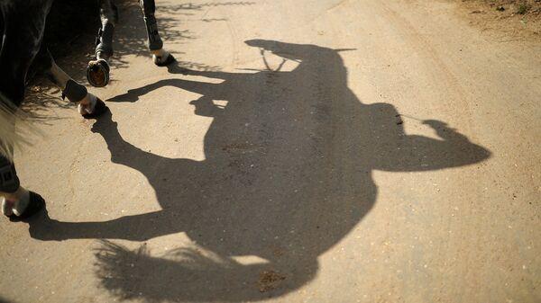 Тень лошади