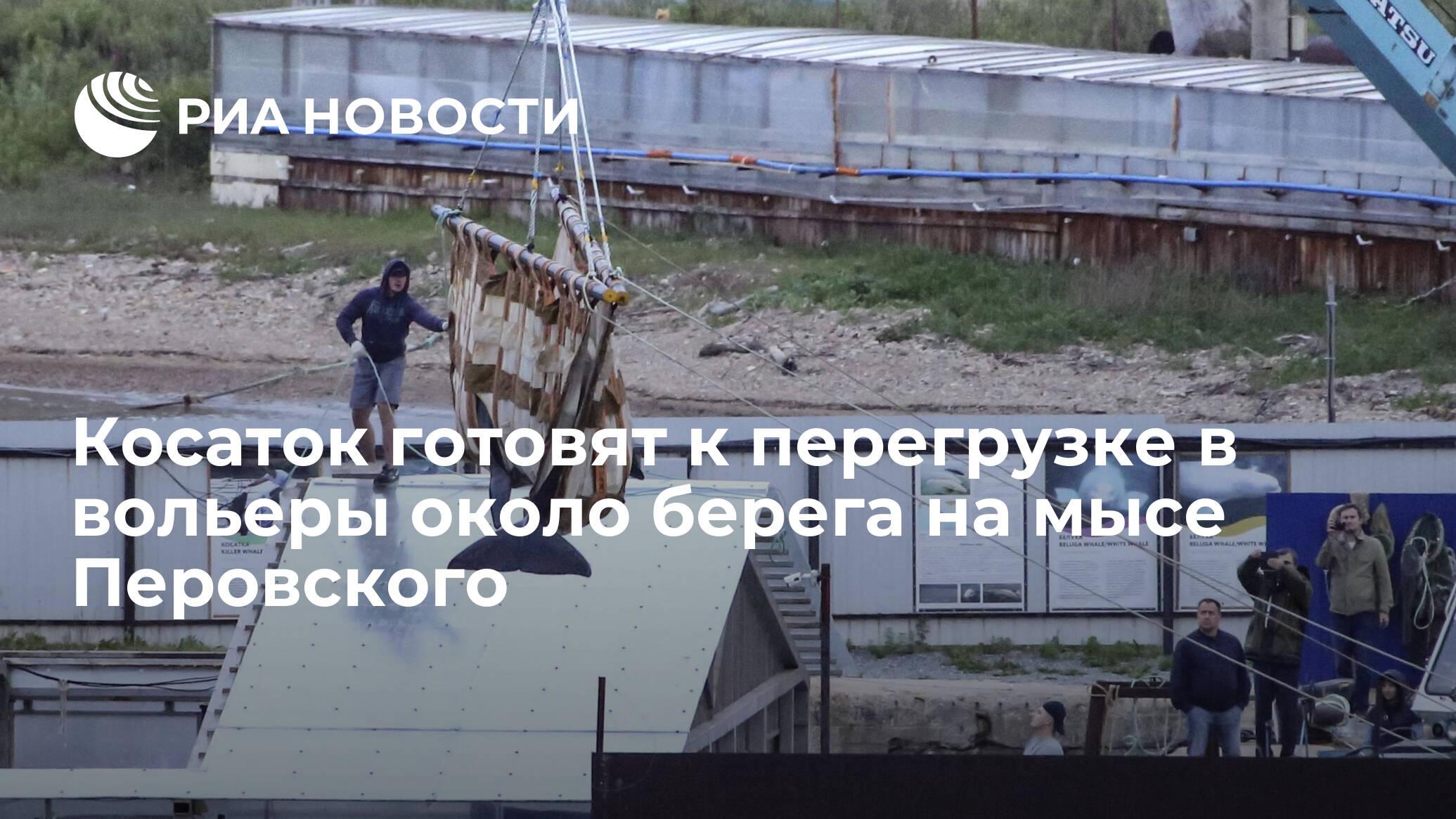 Косаток готовят к перегрузке в вольеры около берега на мысе Перовского