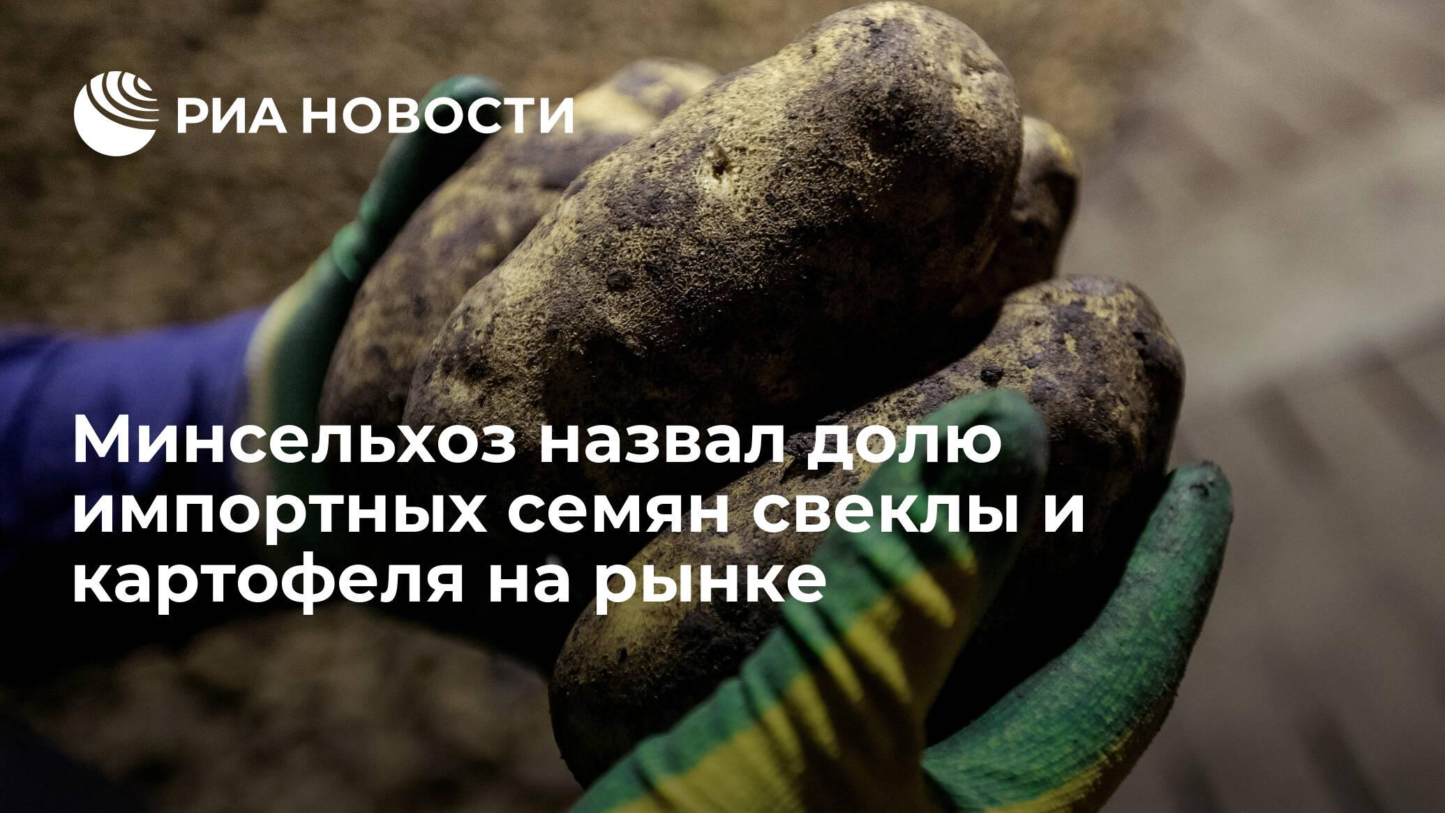 Минсельхоз назвал долю импортных семян свеклы и картофеля на рынке